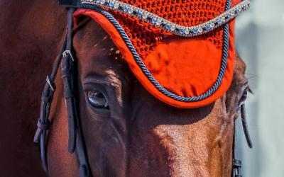 Captura de Pantalla 4 de Beauty of Horses para windows