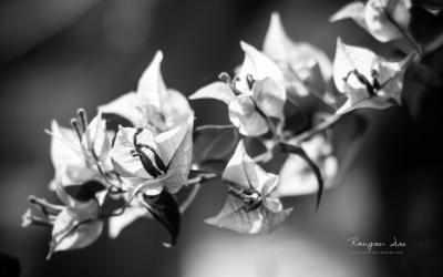 Imágen 4 de Floral Geometry 2 by Rangan Das para windows