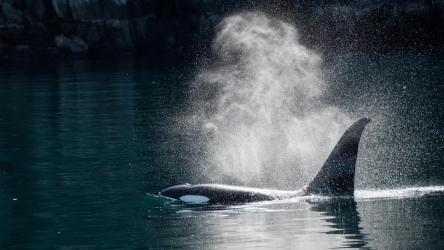 Captura de Pantalla 2 de Whales and Dolphins PREMIUM para windows