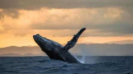 Imágen 4 de Whales and Dolphins PREMIUM para windows