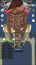 Imágen 11 de 3D Bones and Organs (Anatomy) para windows