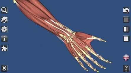 Imágen 8 de 3D Bones and Organs (Anatomy) para windows