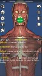 Captura de Pantalla 12 de 3D Bones and Organs (Anatomy) para windows