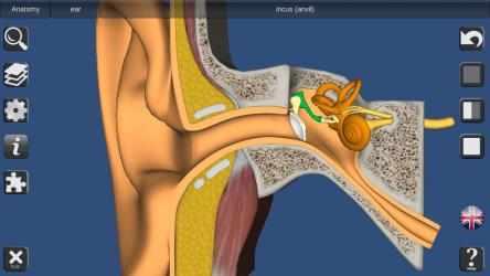 Imágen 7 de 3D Bones and Organs (Anatomy) para windows