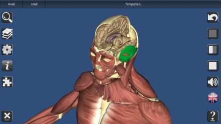 Captura de Pantalla 4 de 3D Bones and Organs (Anatomy) para windows