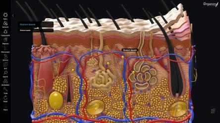 Captura de Pantalla 4 de 3D Organon Anatomy - Enterprise Edition para windows