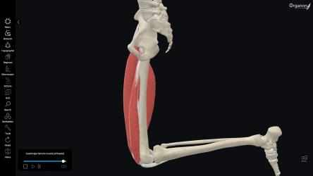 Imágen 6 de 3D Organon Anatomy - Enterprise Edition para windows