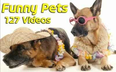 Imágen 1 de Funny Pets para windows