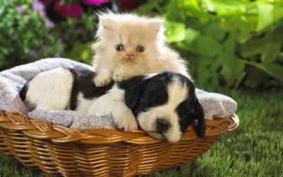 Imágen 6 de Funny Pets para windows